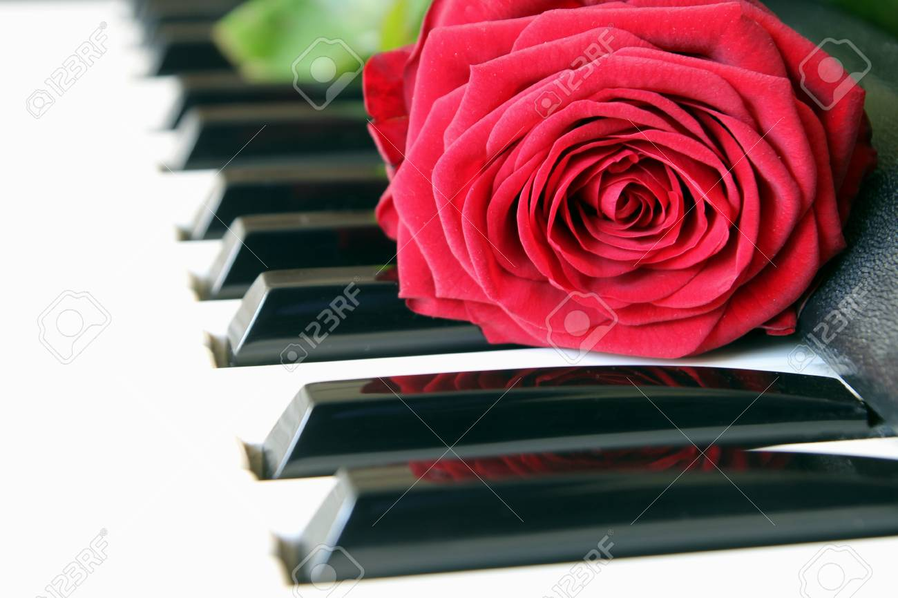 Red rose on piano keyboard  Love song concept, romantic music