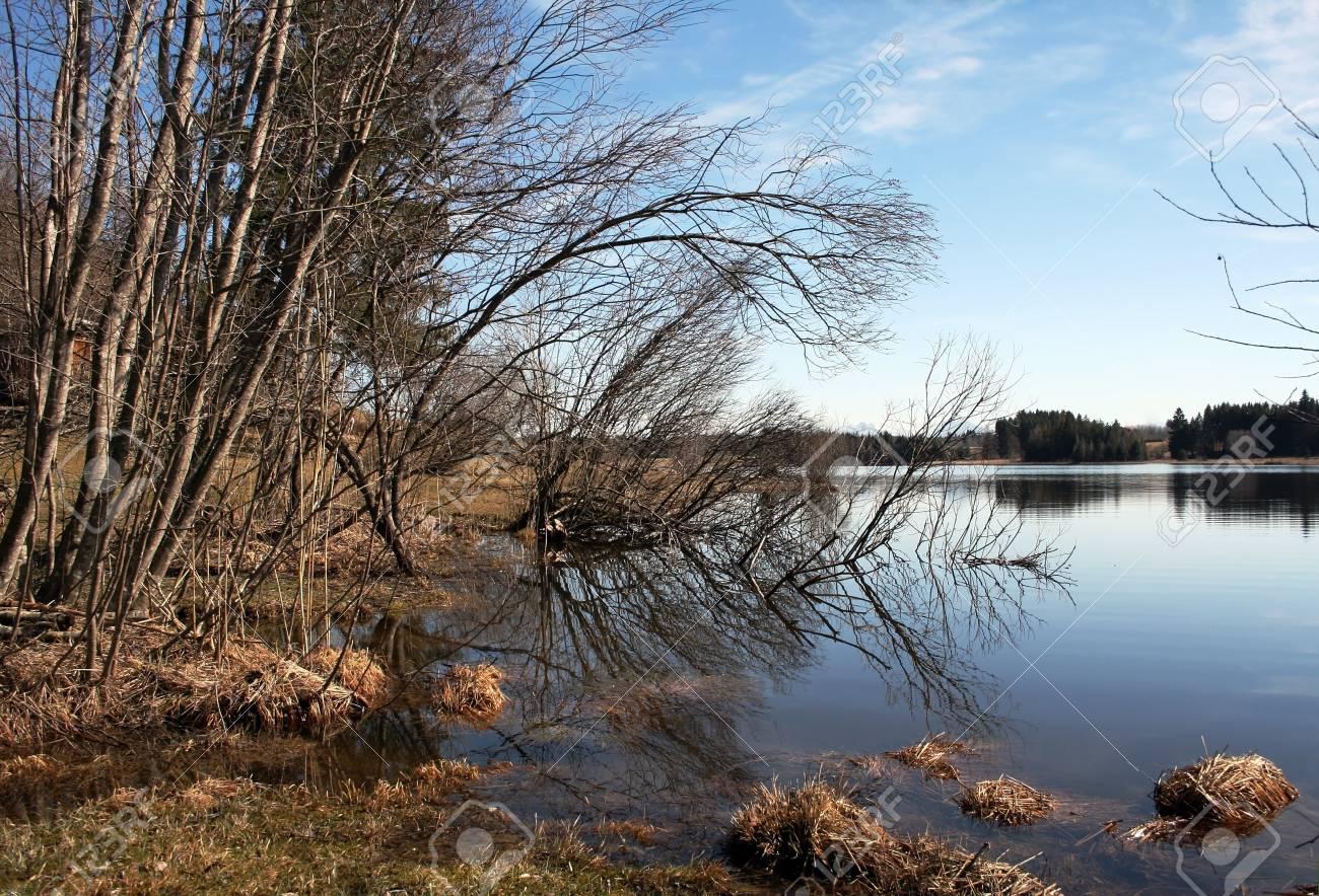 A bog lake in Bavaria, Germany Stock Photo - 16911265