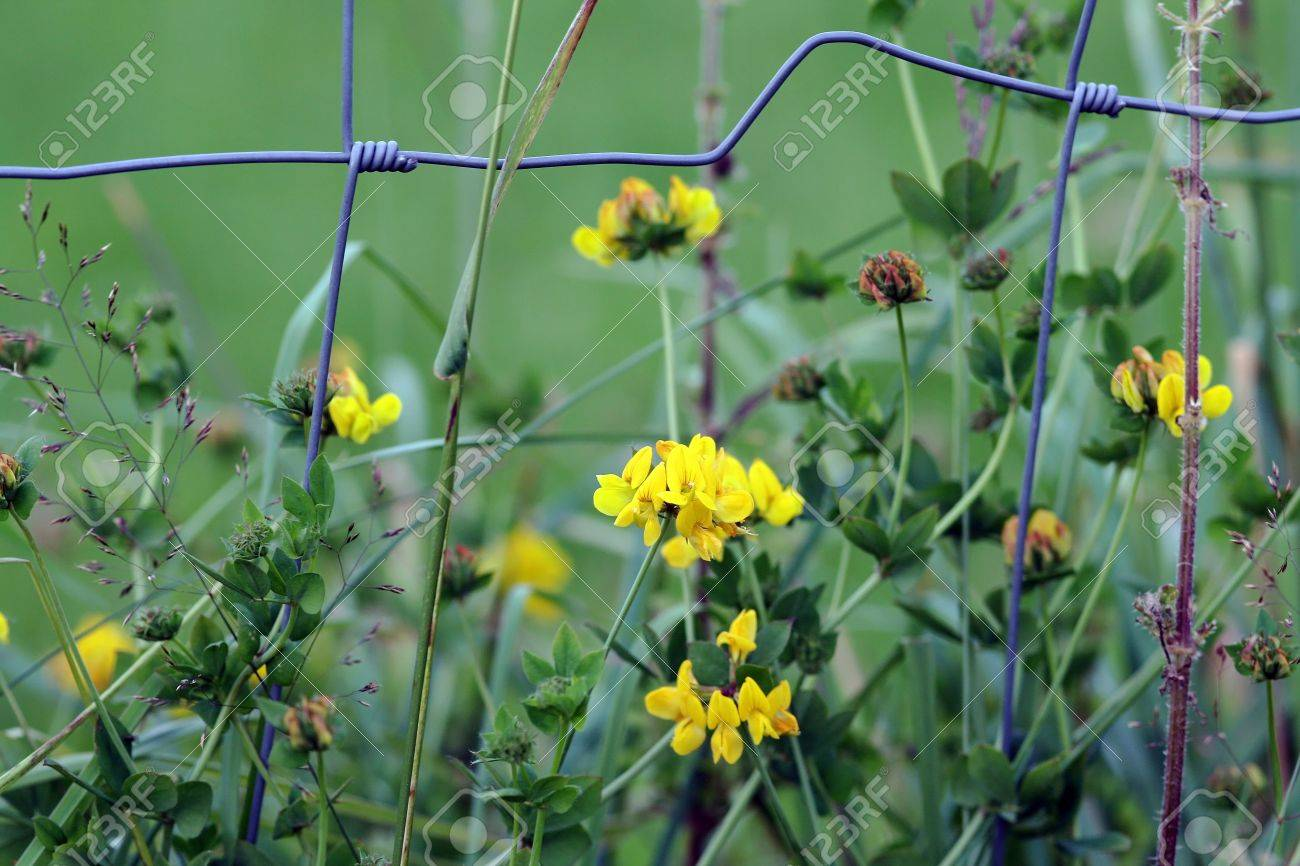 The flowers behind the fence Stock Photo - 16968415