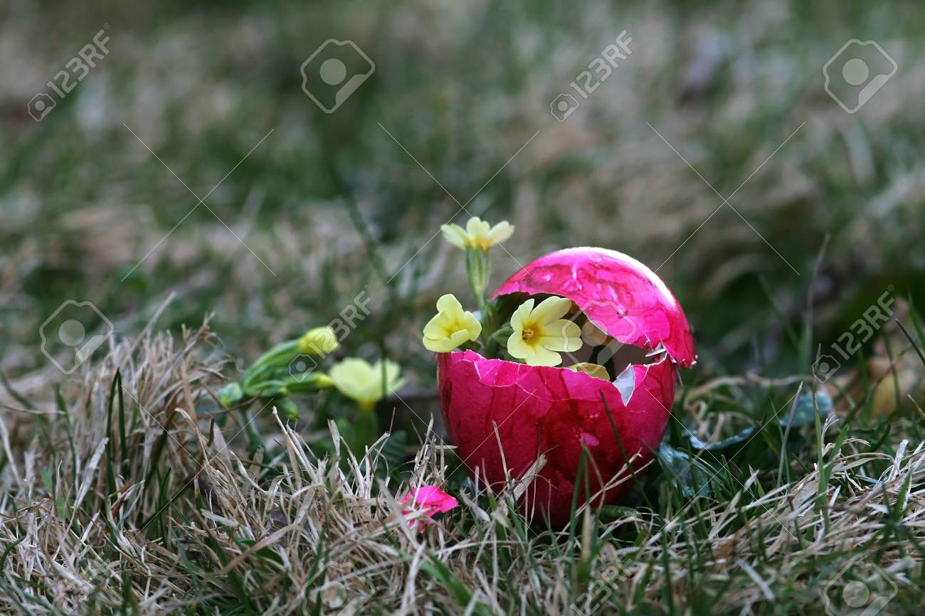 An unusual Easter egg with flowering content Stock Photo - 17799274
