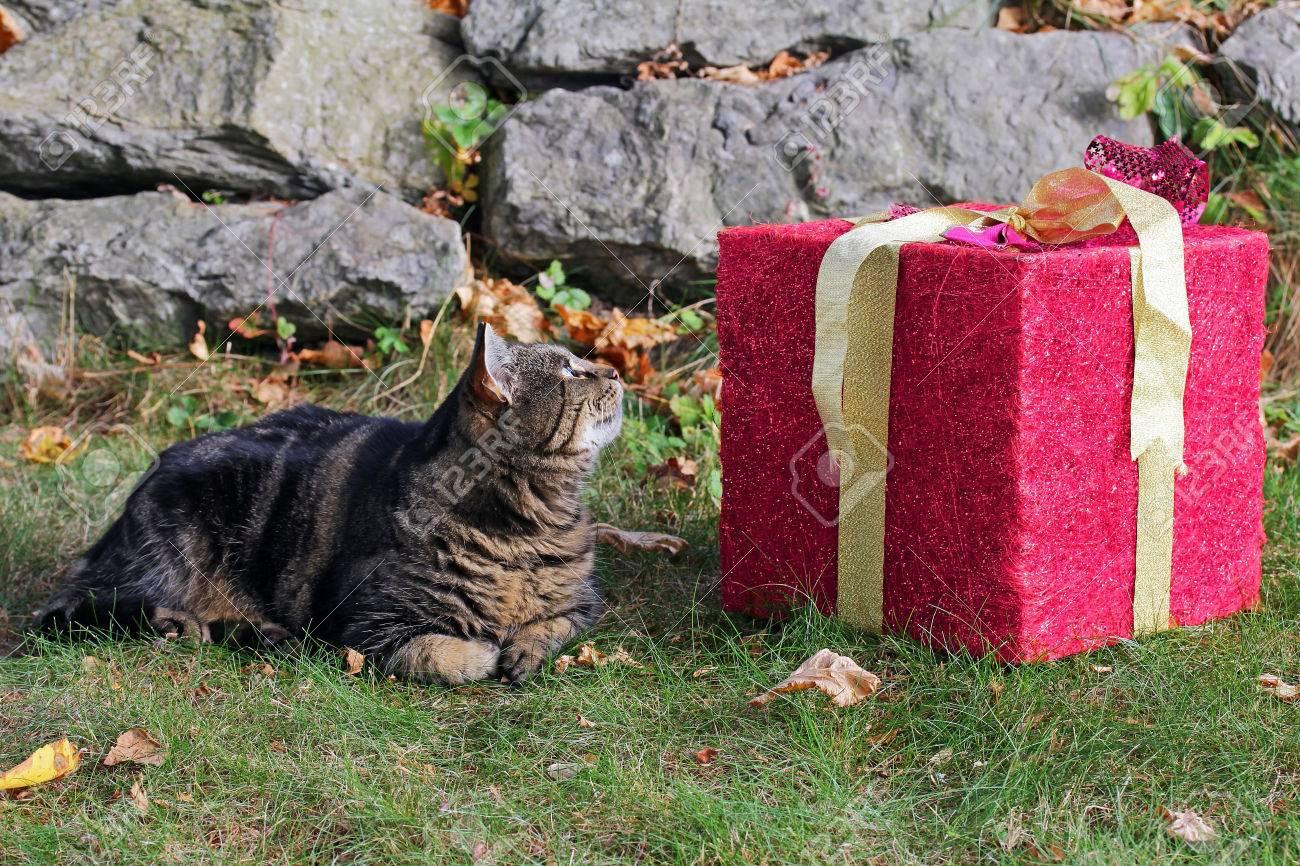 Ein Großes Geschenk Für Die Katze. Weihnachtsgeschenk Für Das Tier ...
