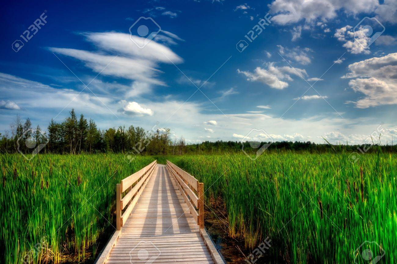 A wooden boardwalk cuts through the tall reeds and cattails of a Canadian wetland. Stock Photo - 9944932