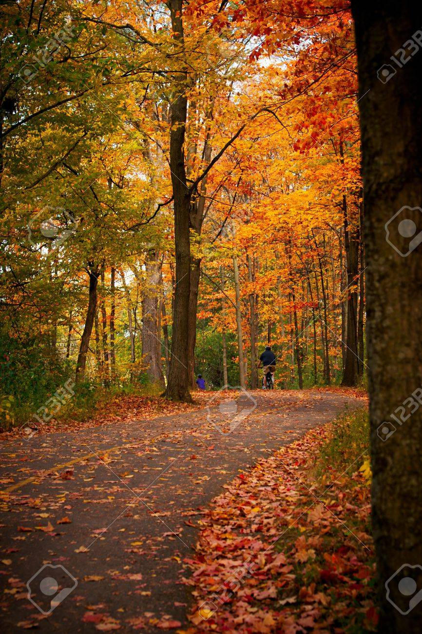 Cyclists bike down a winding bicycle path that cuts through the rich autumn foliage of Vincent Massey Park in Ottawa, Ontario Canada. - 12470464