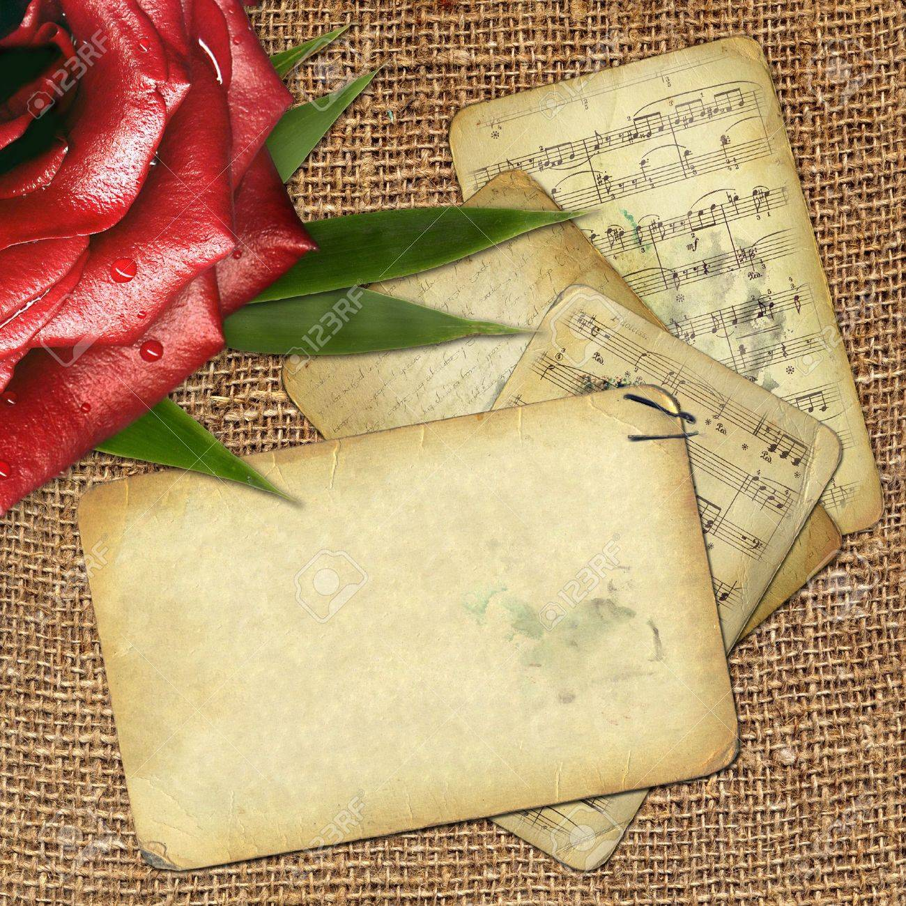 grunge old paper for design with red rose Stock Photo - 6023457