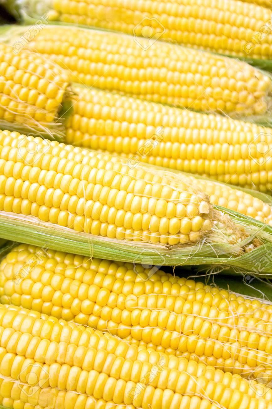 Corn as background Stock Photo - 15080757
