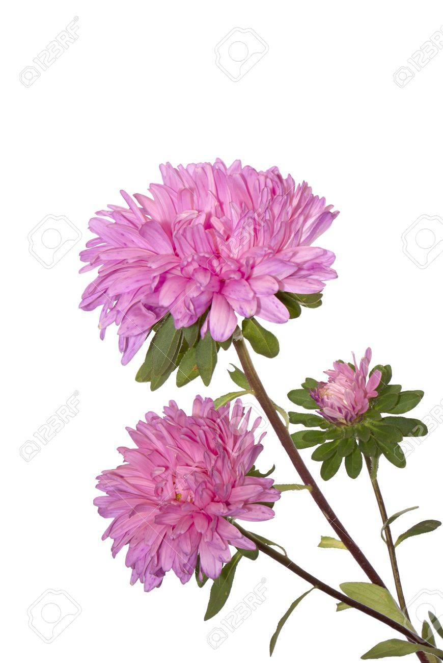 Autumn Flowers Design Over White Backgrounds Stock Photo Picture