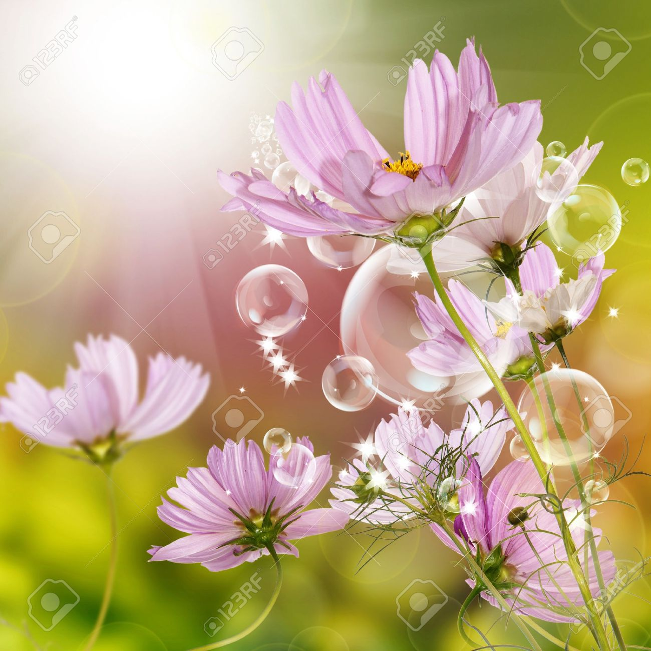 Flower Garden Beautiful Design Stock Photo Picture And Royalty. Beautiful Designs