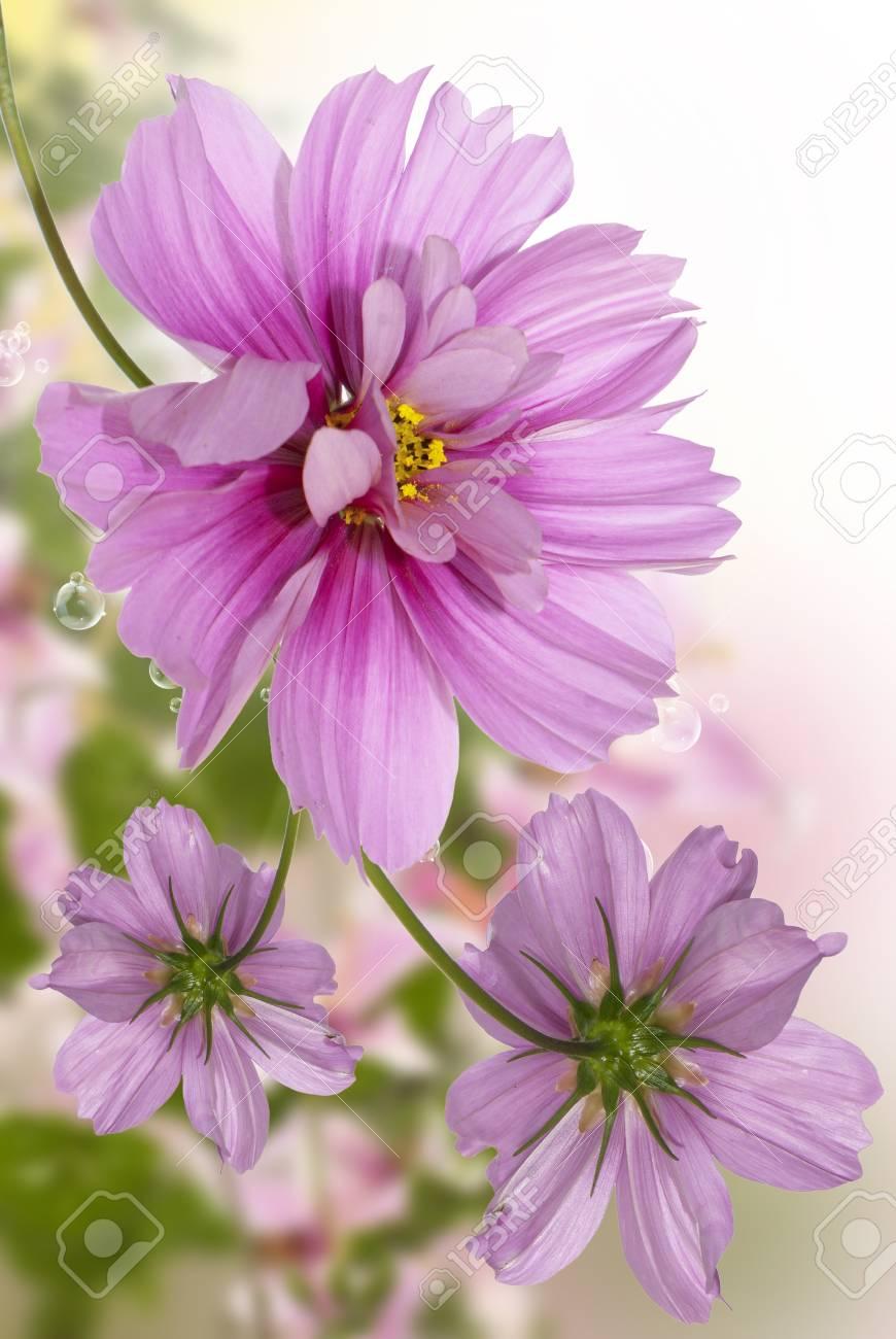 Exotic flowers floral beautiful card stock photo picture and exotic flowers floral beautiful card stock photo 15961874 izmirmasajfo