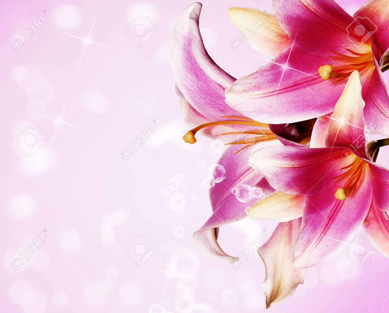 Gavrilichev 1 royalty free photos pictures images and stock beautiful flowers card pink lily izmirmasajfo