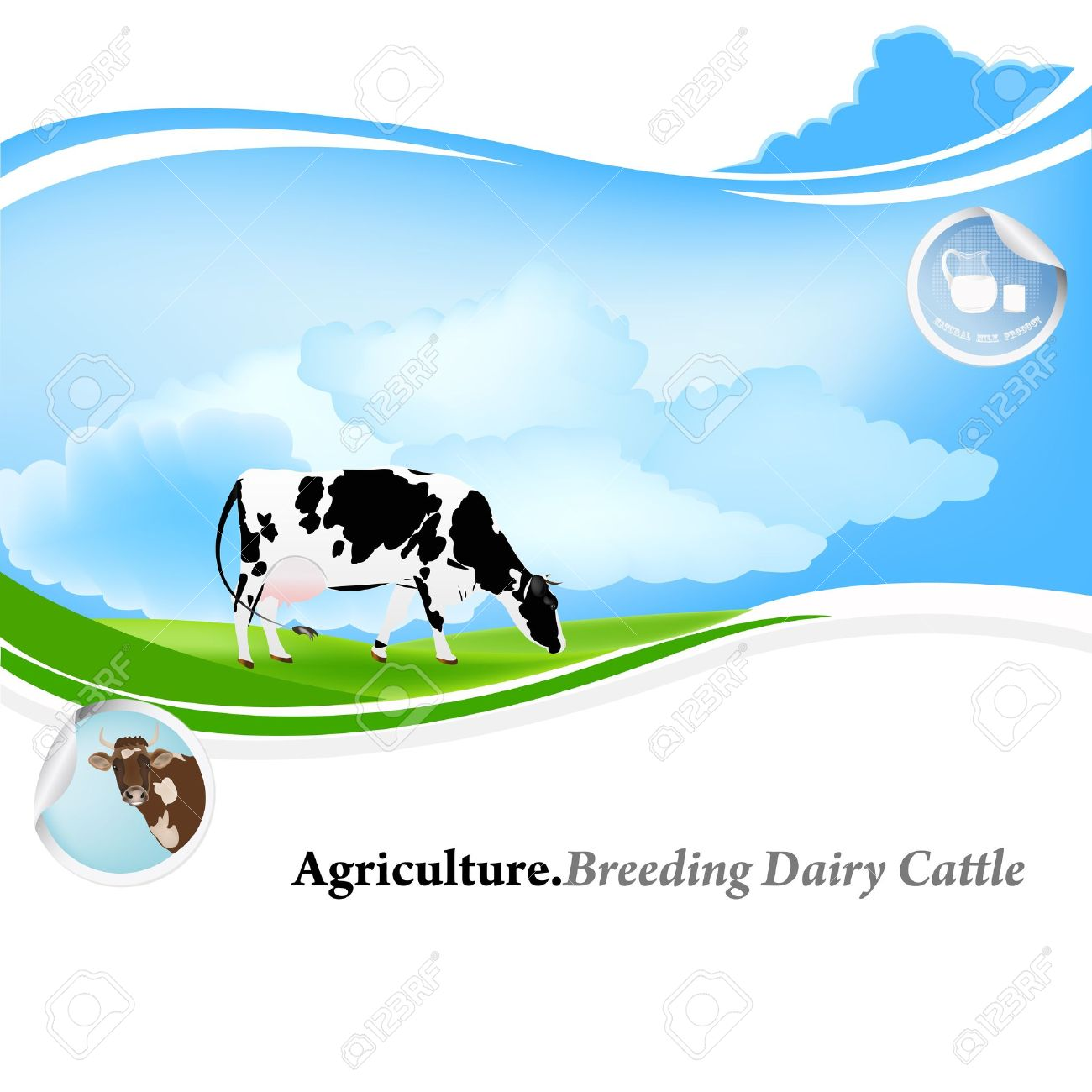 agriculture breeding dairy cattle background royalty free cliparts