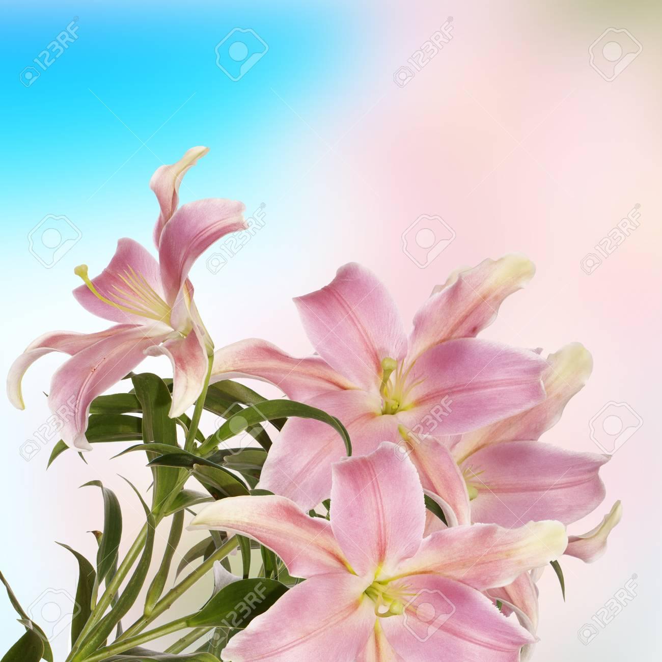 Lily flower bella carta foto royalty free immagini immagini e archivio fotografico lily flower bella carta izmirmasajfo