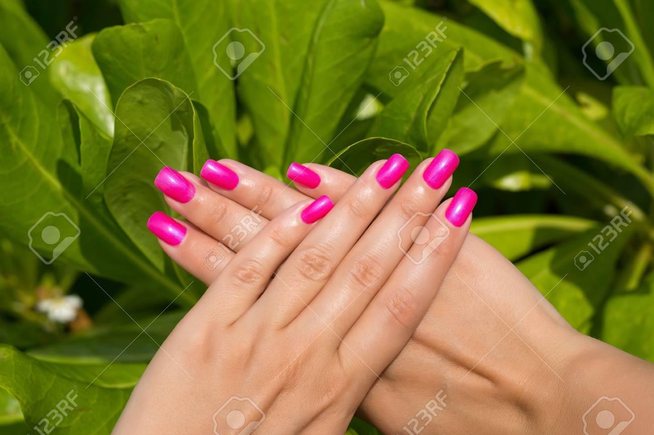 Manos De Mujer Con Manicura Uñas De Color Rosa De Cerca. La Piel Y ...