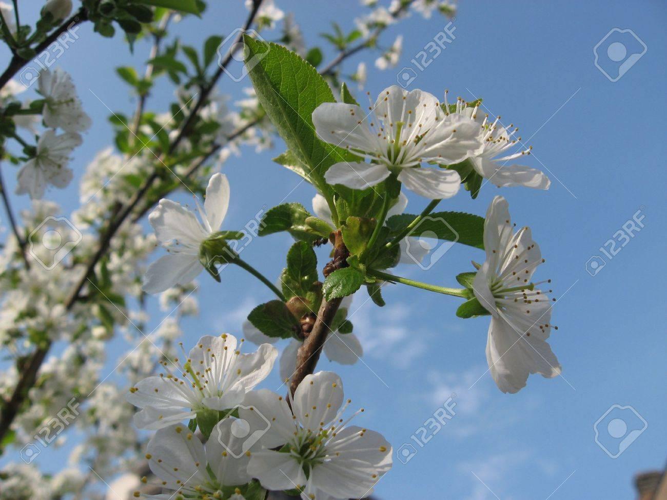 Spring Stock Photo - 4718139