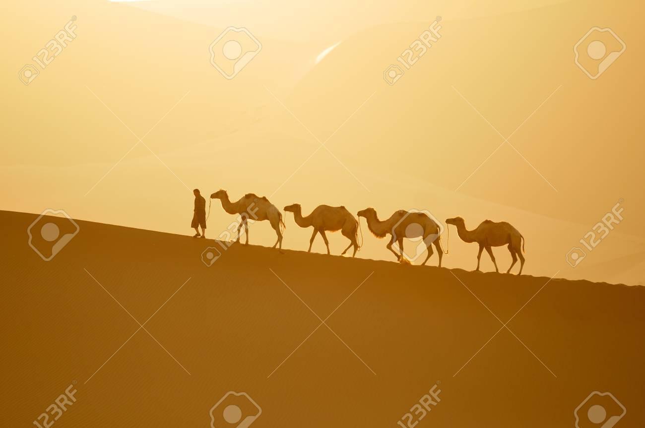 camelcamel camel