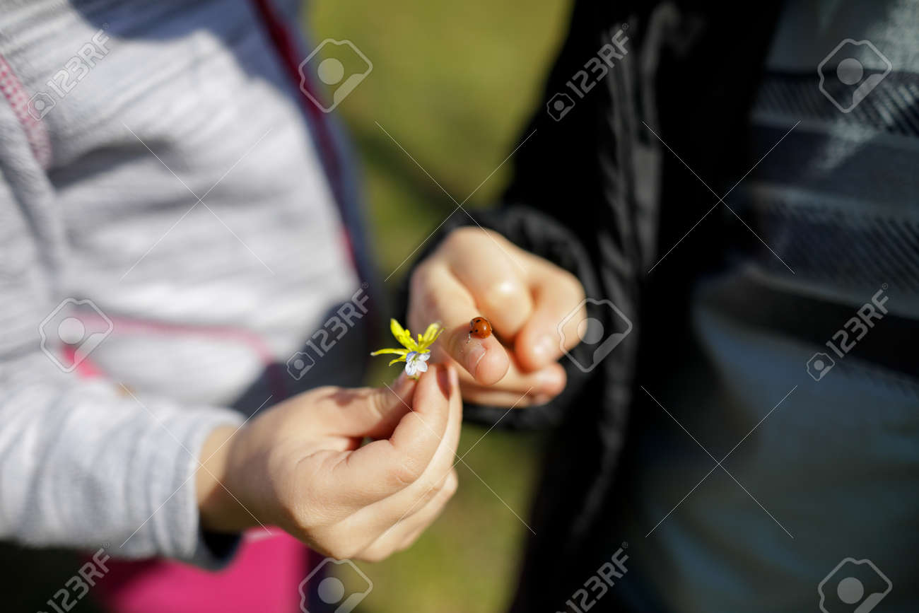 Shallow depth of field (selective focus) image with the hand of a little girl holding a flower and the hand of a little boy holding a ladybug. - 167104263