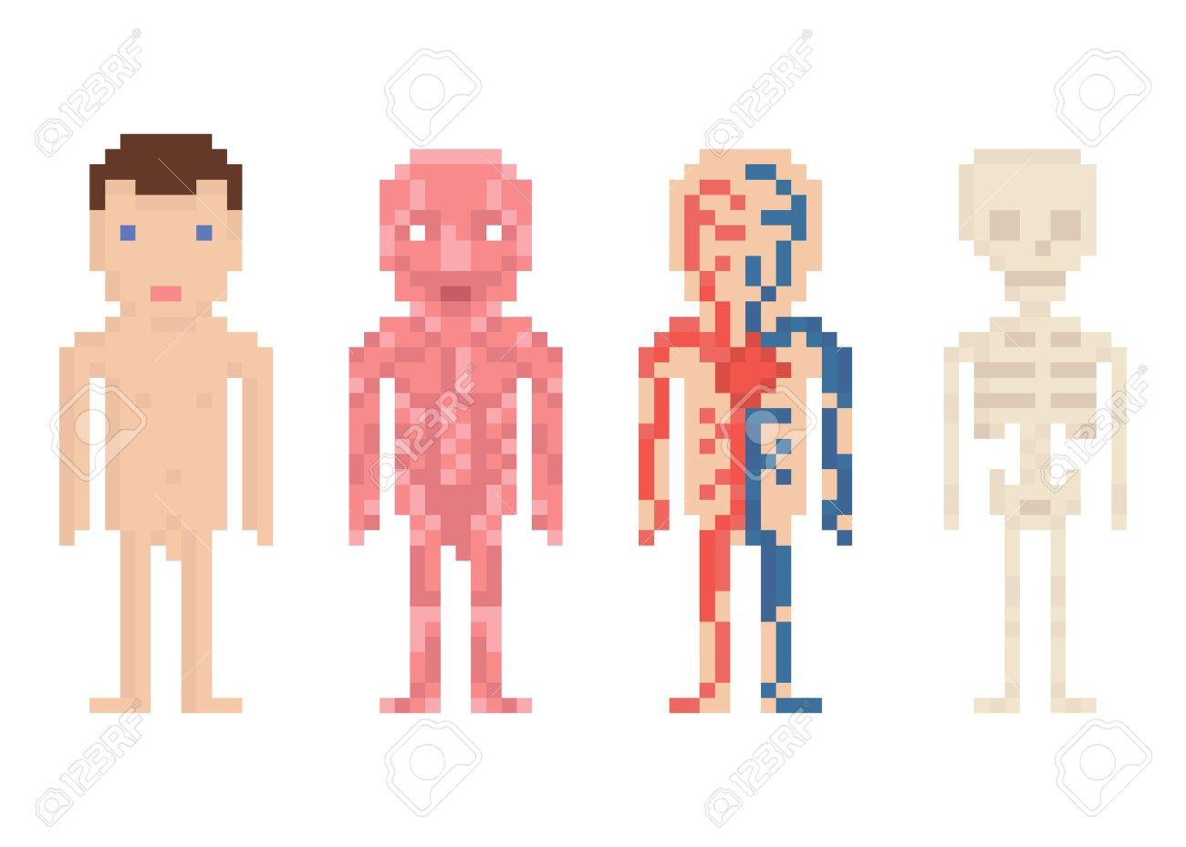 Menschlicher Körper-Anatomie - Nackte Körper, Muskeln, Blut Kreis ...