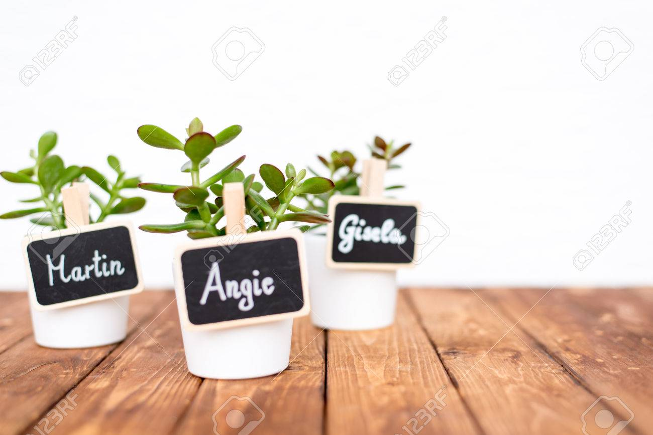 Cute pot plants with name signs