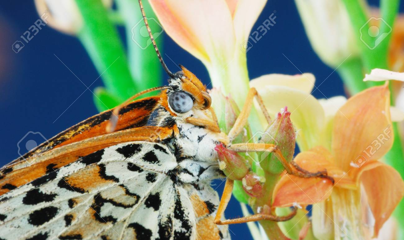 Closeup butterfly head by flower. Stock Photo - 4075839
