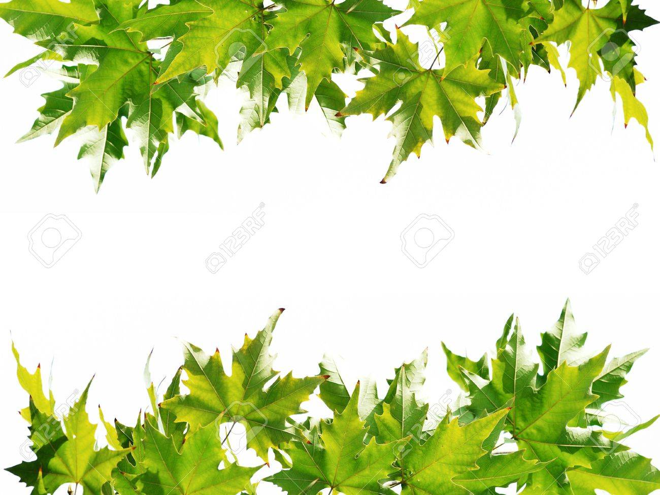 frame of the green chinar leaves stock photo picture and royalty rh 123rf com Chinar Brooklyn Coney Island Chinar Car