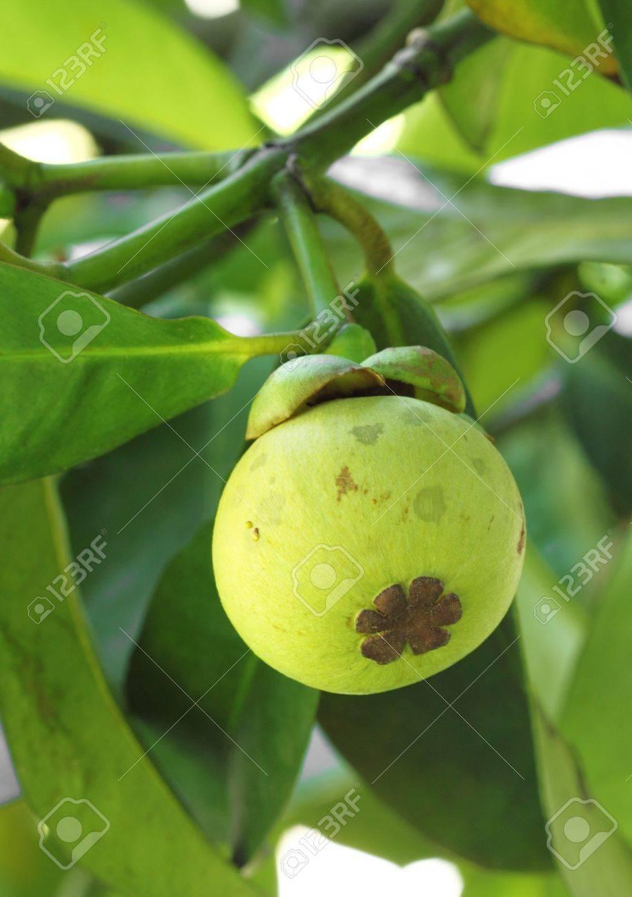 Garcinia cambogia xt african mango photo 8