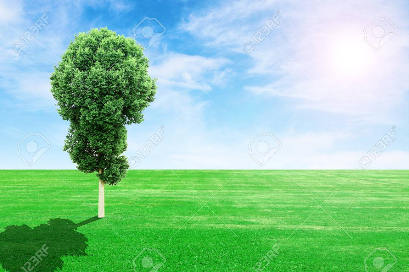green grass field and tree with sun and blue sky Stock Photo - 22469078
