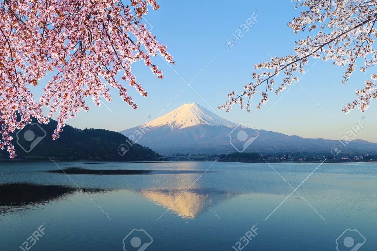Mount Fuji with Cherry Blossom, view from Lake Kawaguchiko, Japan - 33328509