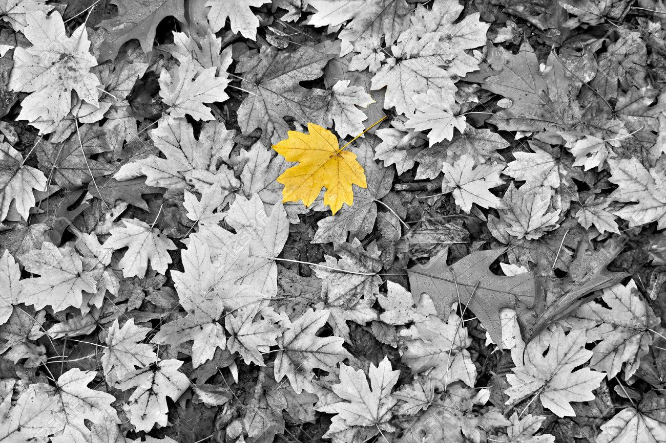 Yellow Maple Leaf On Water Android Wallpaper free download