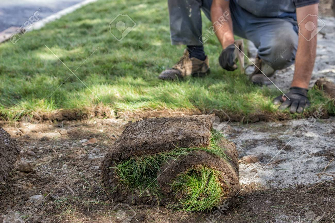 Worker Installing Sod, Lawn And Sod Installation. Selective Focus. Stock  Photo   41554480