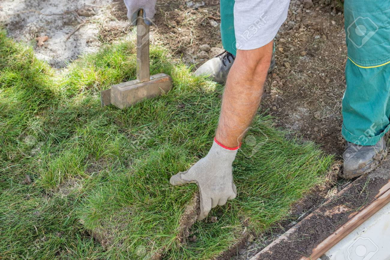 Worker Installing Sod, Lawn And Sod Installation. Selective Focus. Stock  Photo   41554512