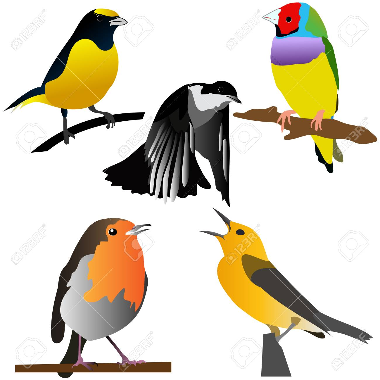 Collection Of Colorful Birds Vector Illustrations Good For Kids