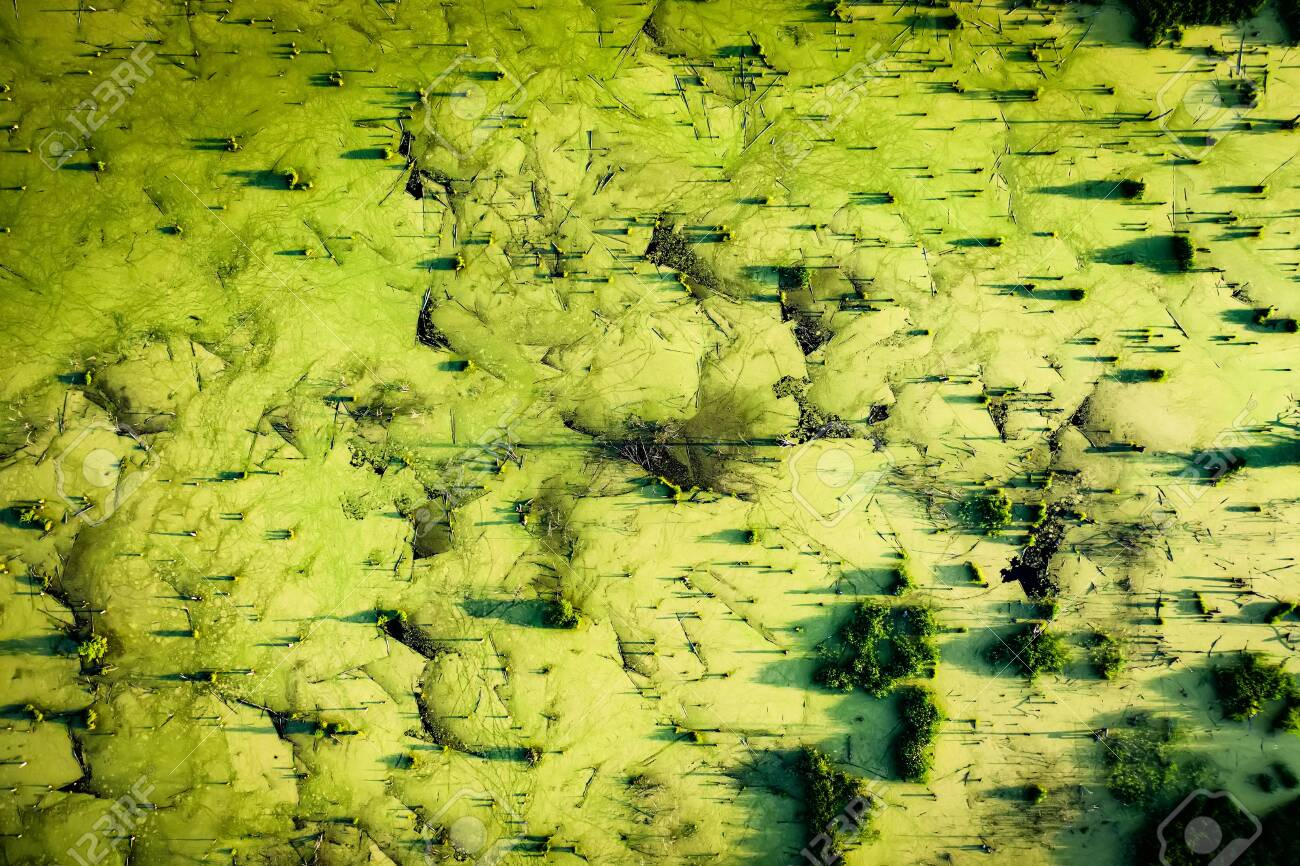 Mysteriously pond with old stumps and snags in front of the forest, top aerial view - 147563220