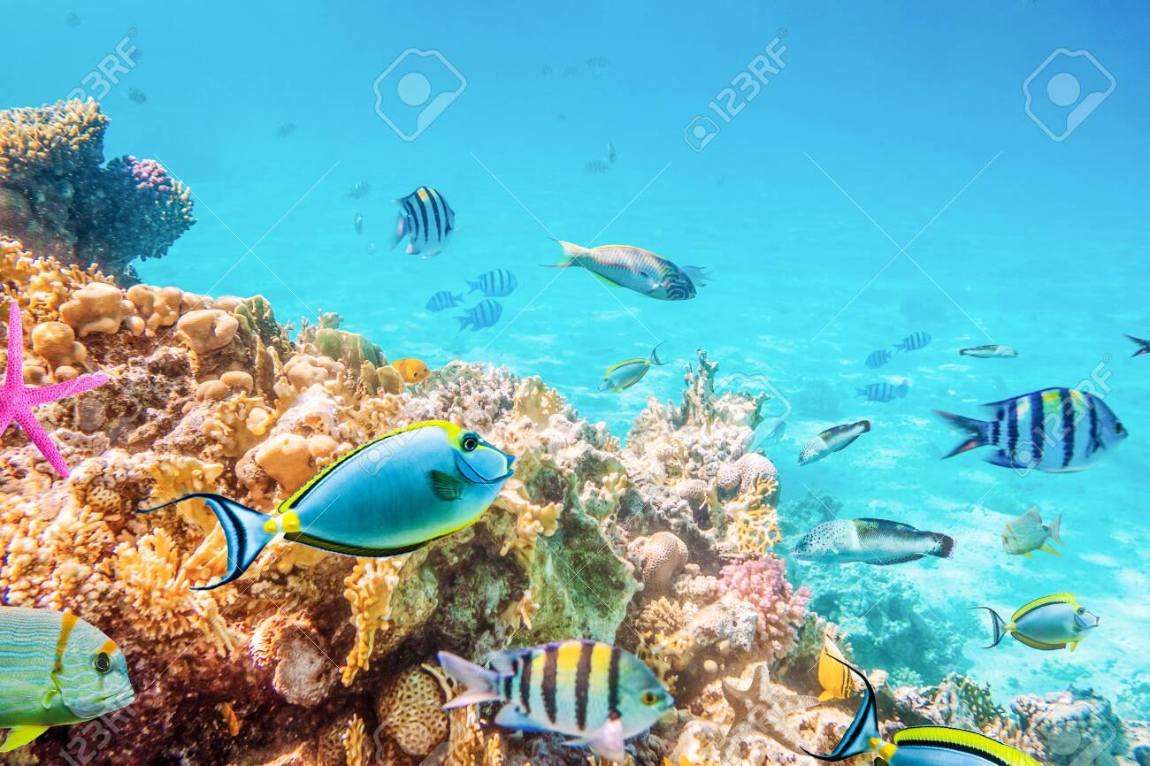 Coral reefs and fish and diver, underwater world - 150781506
