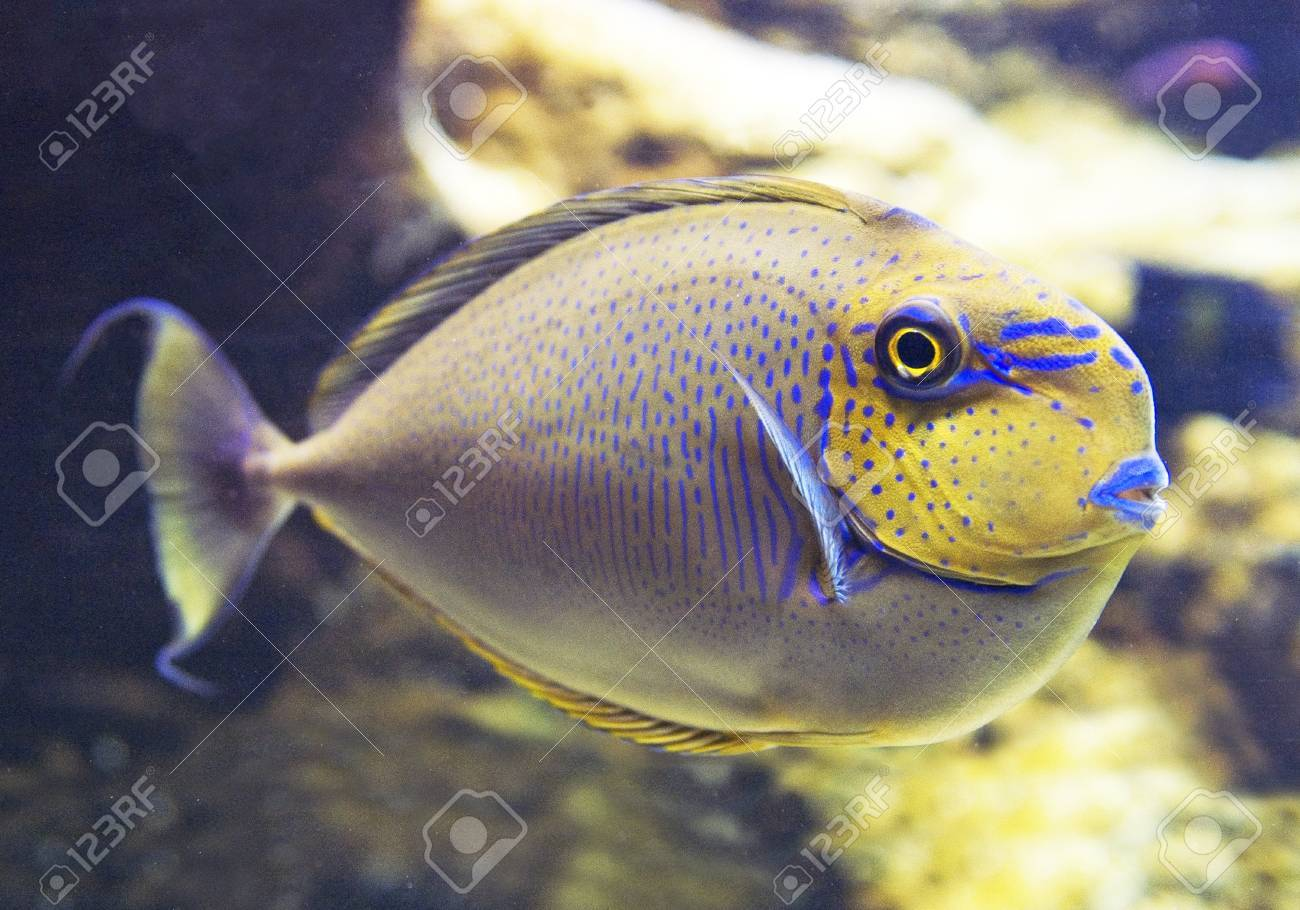 Fish with yellow head Stock Photo - 12249543