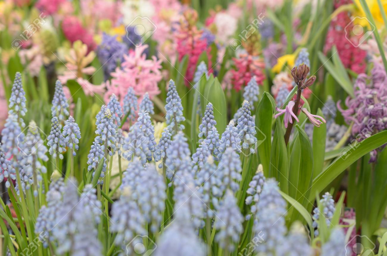 Many Flowers Of Blue And White Red And Yellow Stock Photo Picture