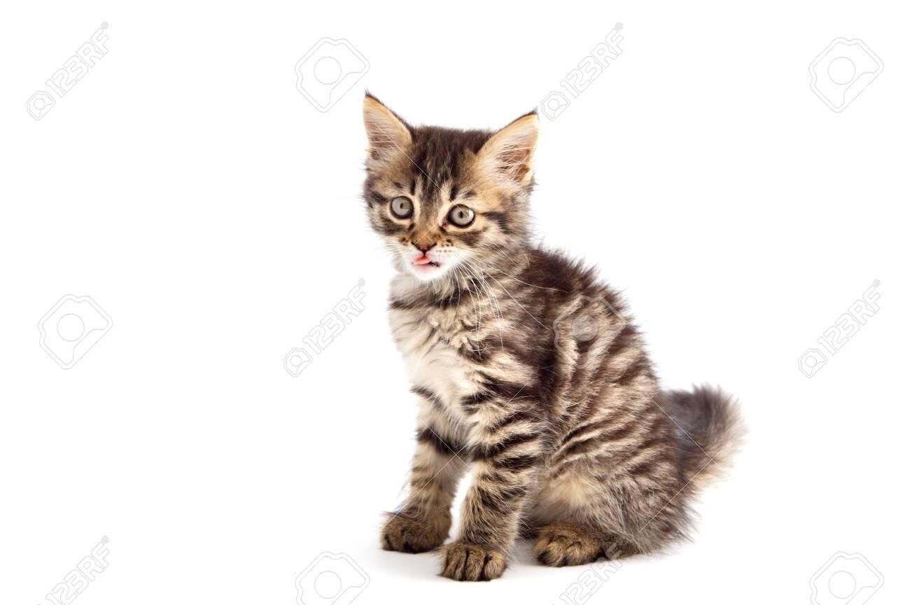small cat of angora on white bottom Stock Photo - 597213