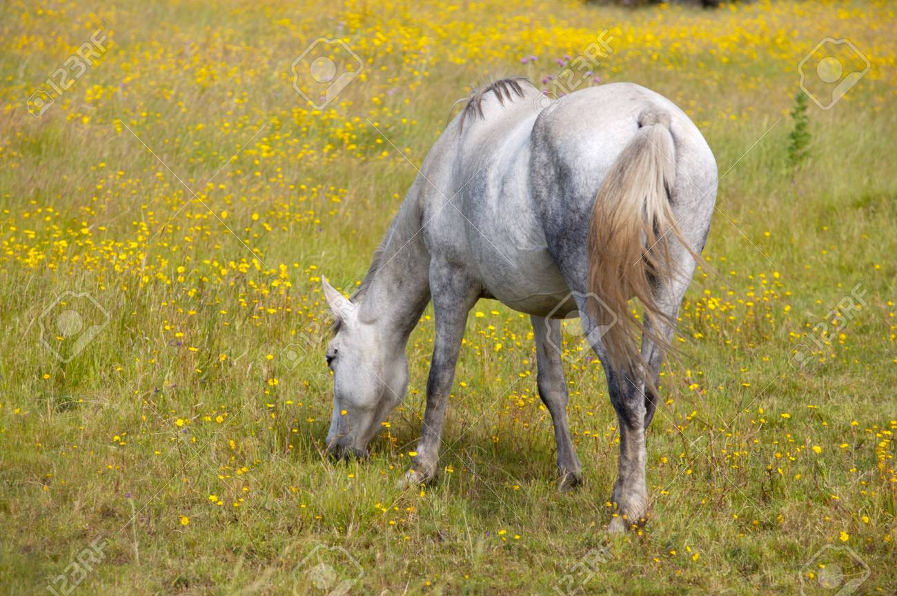 photo of a horse in freedom eating grass Stock Photo - 1208281