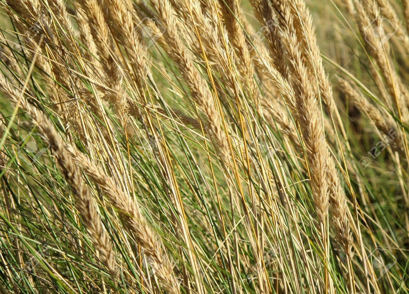 Beautiful wallpaper image with many grasses herbs Stock Photo - 15503613