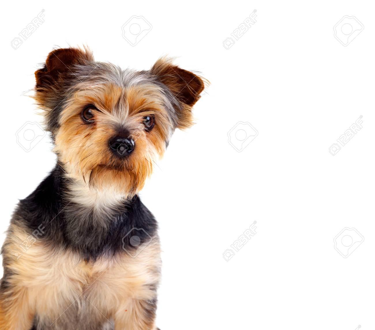 Großartig Haar Terrier Mix Rasse Ideen - Elektrische Schaltplan ...