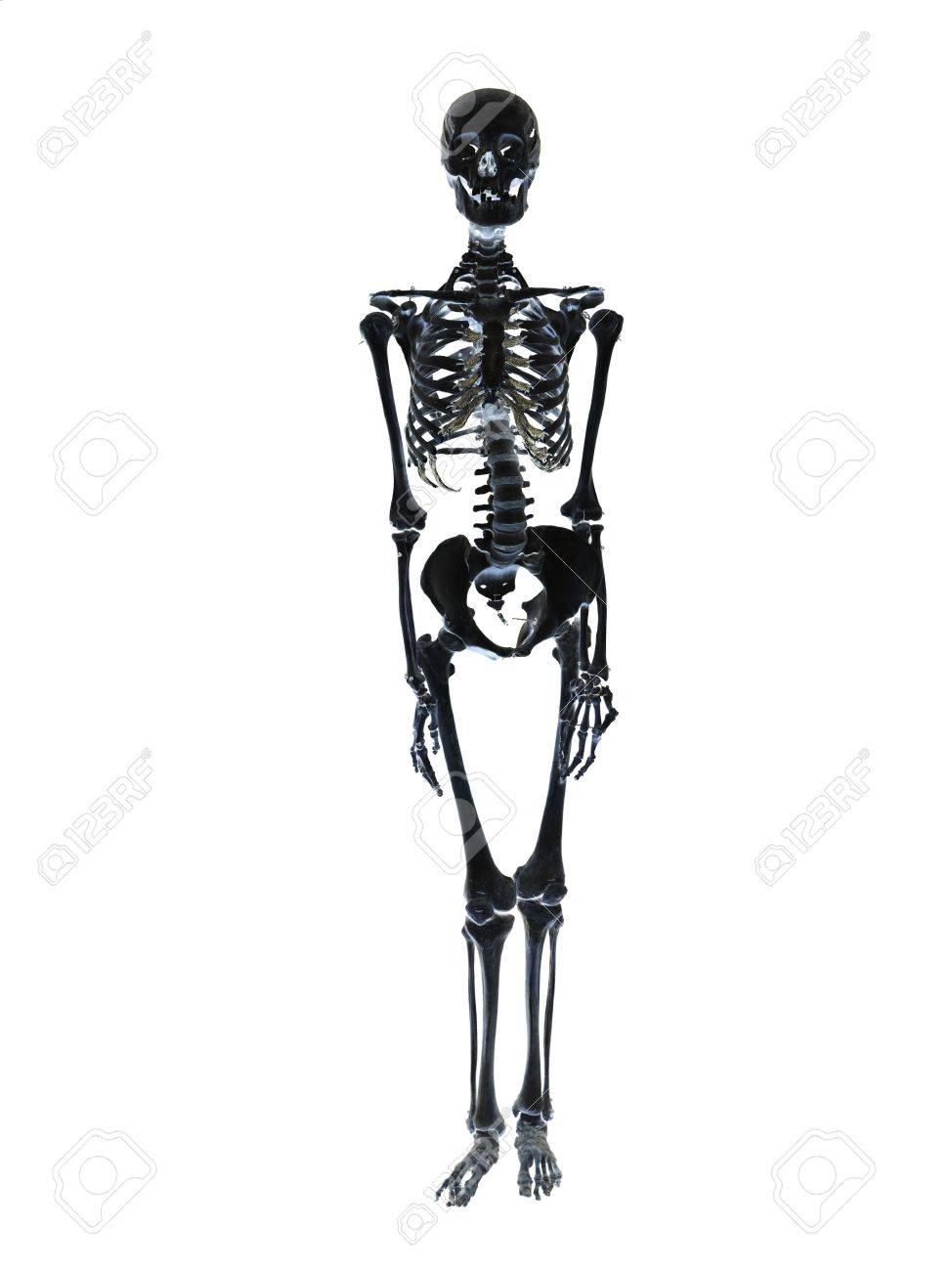 4836949-black-skeleton-towards-white-background.jpg