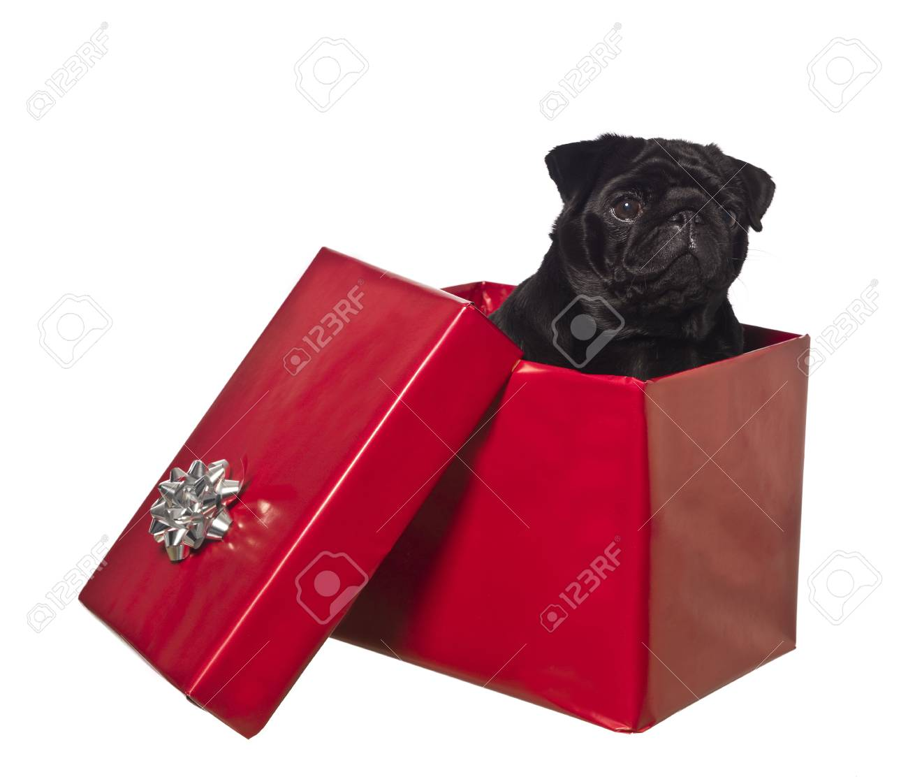 Dog in a gift box isolated on white Stock Photo - 5664003