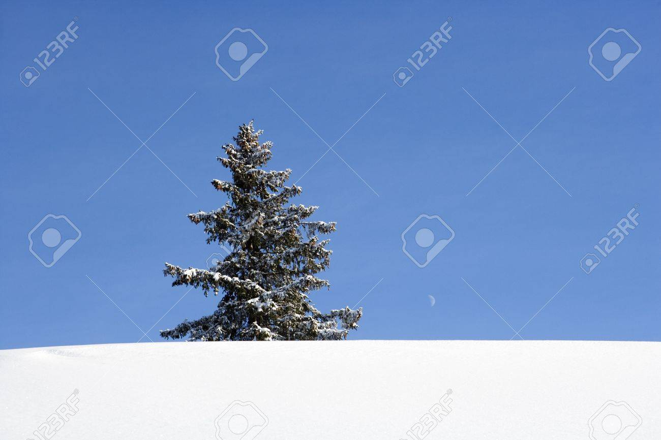 Lonely Christmas.Lonely Christmas Tree In Winter Landscape