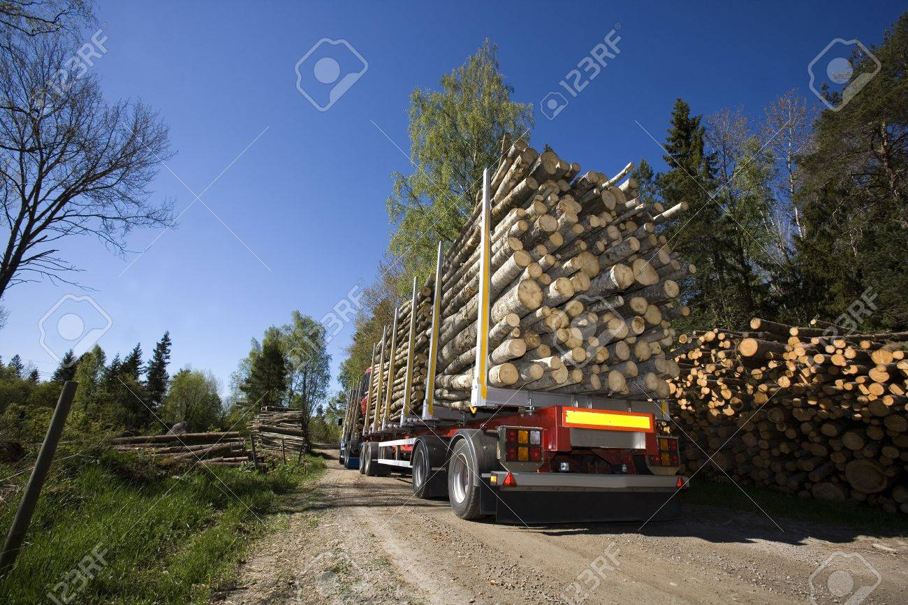 Truck with timber in the forest Stock Photo - 13631889