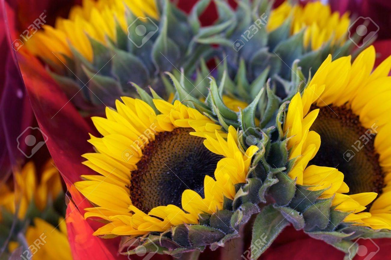 Bouquet Of Several Beautiful Yellow Sunflowers With Textured Stock Photo Picture And Royalty Free Image Image 14551678