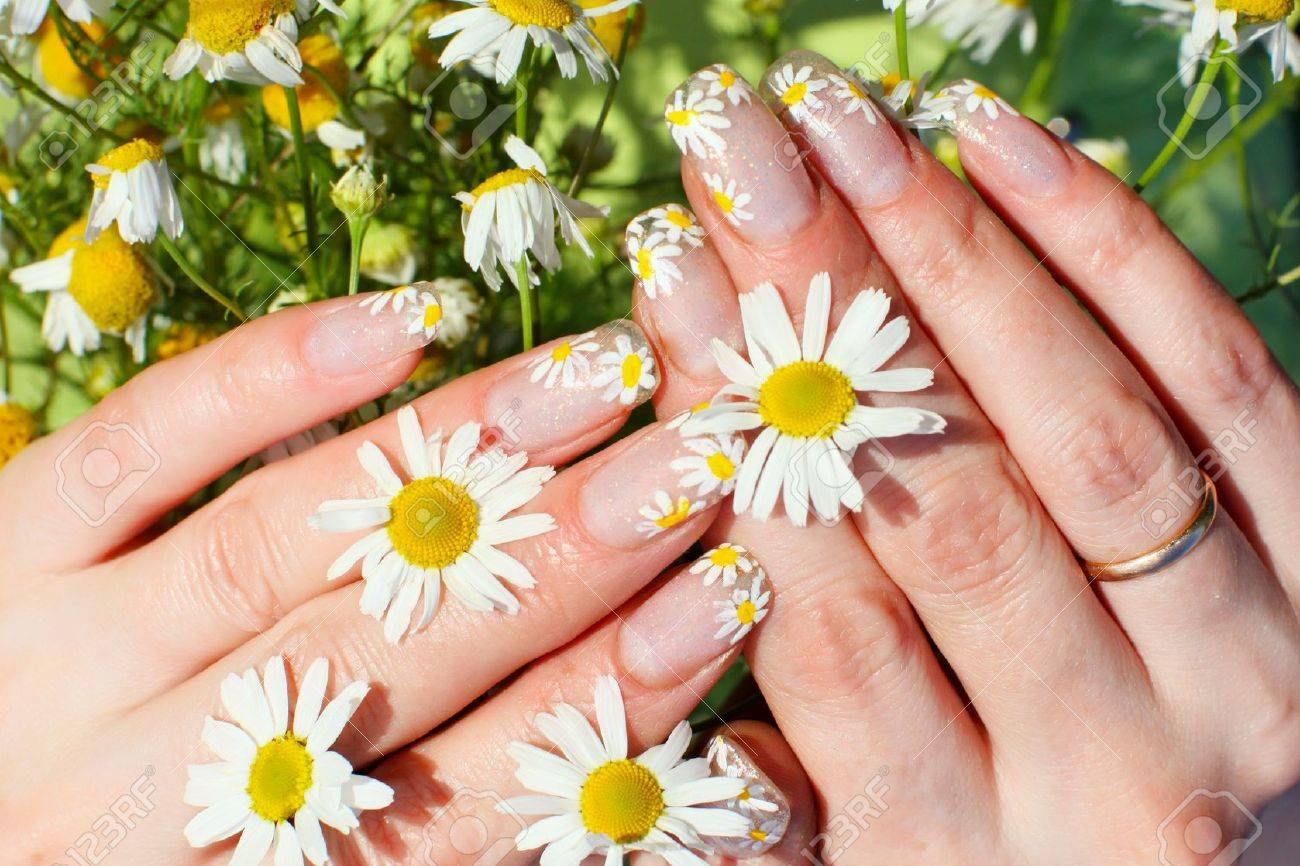 Beautiful Nail Design. Woman Hands With Camomile Flowers Stock Photo ...