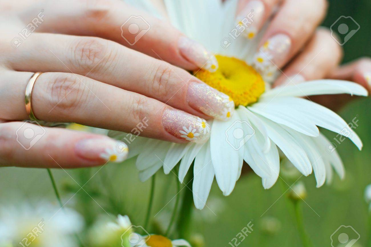 Beautiful Nail Design. Woman Hands With Camomile Flower Stock Photo ...