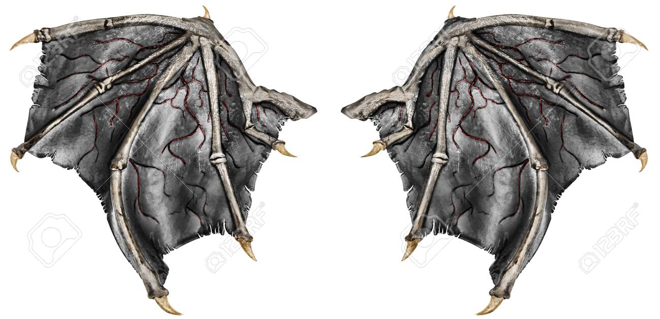 Bloody dragon wings, isolated on white background. Close up. - 124266200