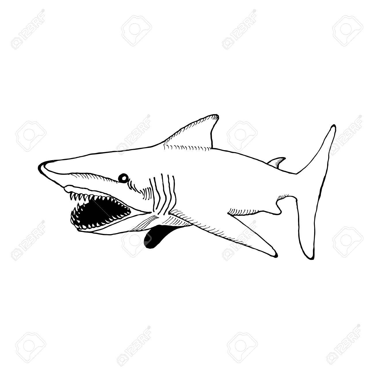 Hand Draw A Shark With An Open Mouth And Sharp Teeth In The Style ... for shark drawing open mouth  lp00lyp