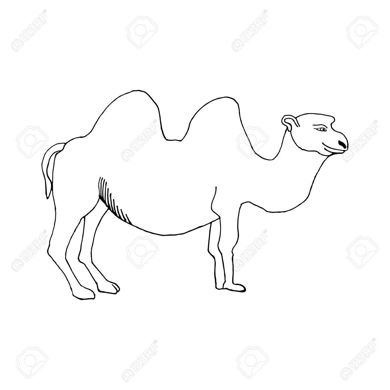 Camello Drenaje De La Mano En El Estilo Del Dibujo Para Diseñar ...