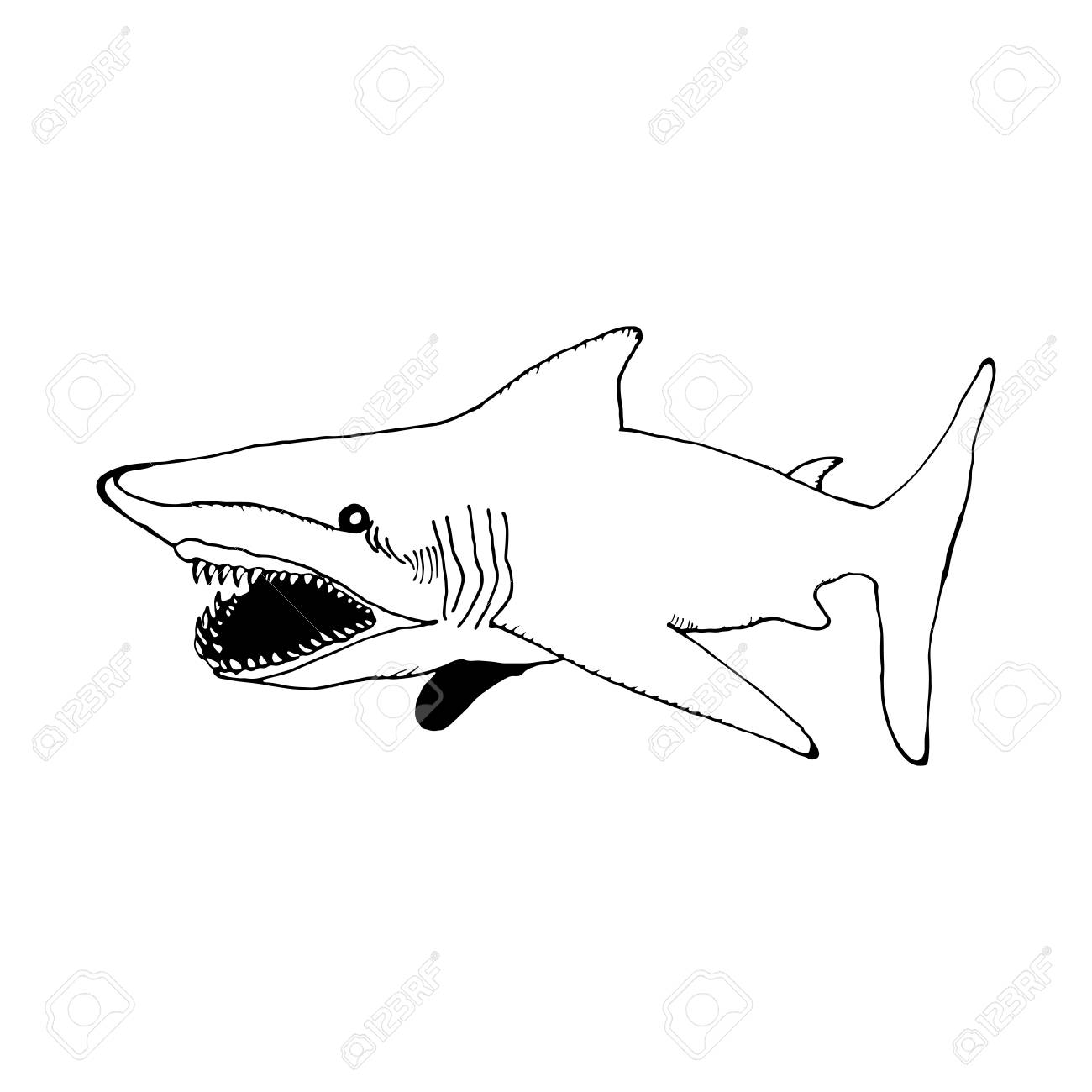 Mano Dibujar Un Tiburón En El Estilo De Un Dibujo Sobre Un Fondo Blanco Y Negro Que Se Utiliza Para Las Banderas Folletos Libros Para Colorear