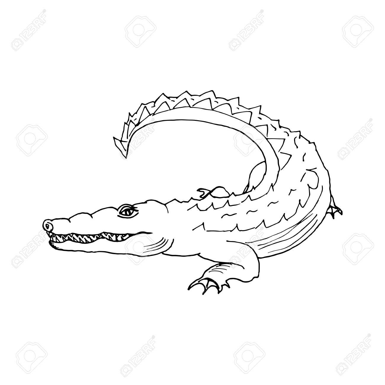Schön Alligator Und Krokodil Malvorlagen Galerie - Druckbare ...